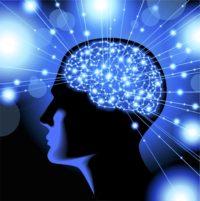 Brain - Neuro-Leadership
